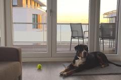 00014-Ostsee-Ferienwohnung-mit-Hund