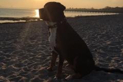 Hund-am-Strand-bei-Sonnenuntergang