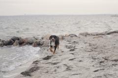 Hund-am-Strand