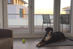Hundefreundliche-Ferienwohnung-für-urlaub-an-der-Ostsee