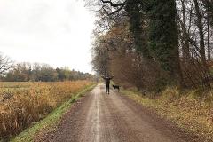 Hundespaziergang-am-Waldrand