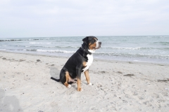 004-Ostsee-Hund-am-Meer