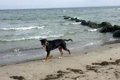 Ostsee-Sammy-am-Meer