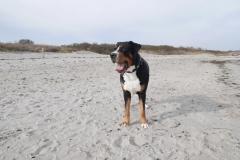 Ostsee-Spaziergang-mit-Hund