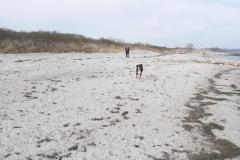 Ostsee-Strandspaziergang-laufender-Hund