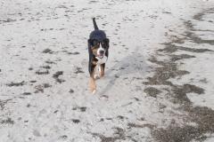 Ostsee-Strandspaziergang-mit-Hund
