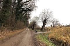 Ostsee-am-Waldrand