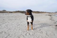 Sammy-Ostsee-Sehnsucht