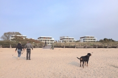 Sammy-am-Strand-Südkap-Pelzerhaken