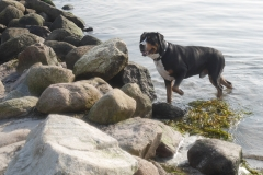 Sammy-im-Oktober-am-Ostseestrand