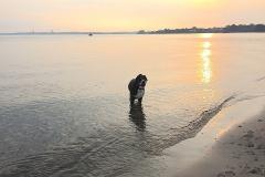Sammy-in-der-Ostsee-bei-Sonnenuntergang