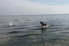 011-Sammy-spielt-in-der-Ostsee