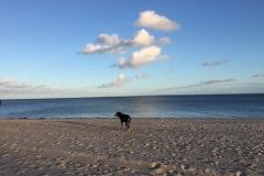 005-Sammy-und-Strandliebe