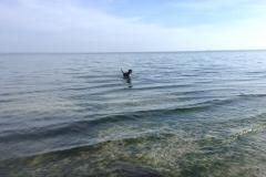 Sammy-weit-in-der-Ostsee