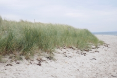 Dünen-Strand-Pelzerhaken