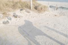 Ostsee-Spaziergang-Hundeschatten-am-Strand
