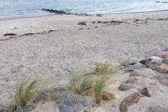 Ostsee-Strandspaziergang-Dünengras