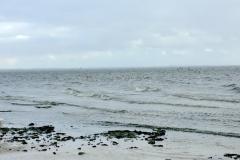 Strand-Pelzerhaken-bei-Sturm-Vögel-3