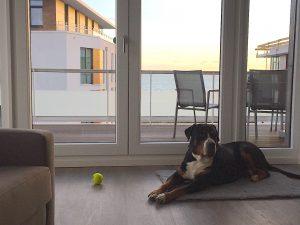 Südkap Pelzerhaken Ferienwohnung für einen Ostsee Urlaub mit Hund