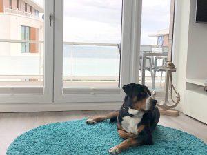 Ostsee Ferienwohnung mit Hund
