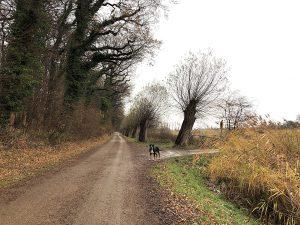 Pelzerhaken mit Hund